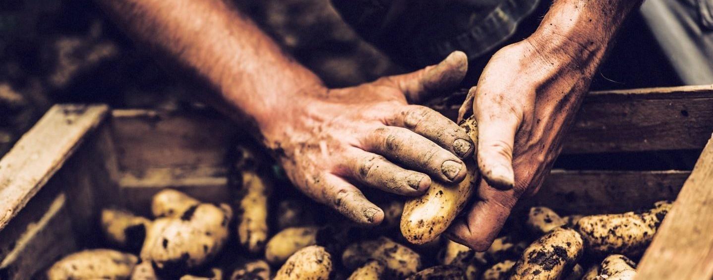 Handen aardappels 1440x958